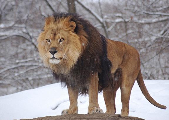 Afrojack – Lionheart (Original Mix)